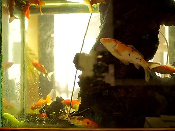 Straub-Aquarium-1